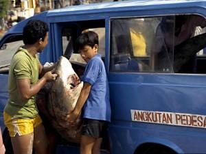Tijdens je rondreis in Indonesië zul je wellicht vaak de bemo nemen