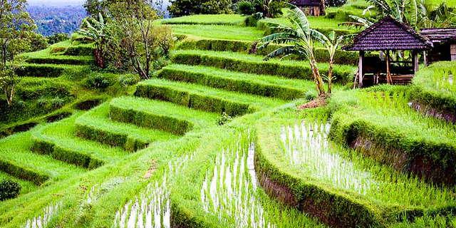 UNESCO Werelderfgoed van Indonesië: Batukaru