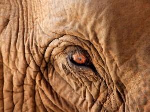 Het Elephant Nature Park is één van de beste plaatsen om olifanten van dichtbij te zien