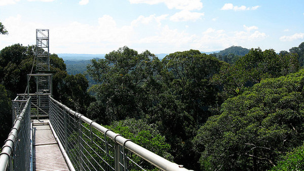 Canopy walk in het Ulu Temburong National Park, één van de bezienswaardigheden van Brunei