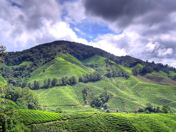 De Cameron Highlands zijn één van de belangrijkste bezienswaardigheden van Maleisië