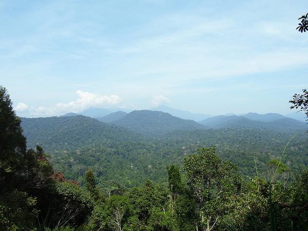 Taman Negara is één van de bezienswaardigheden van Maleisië
