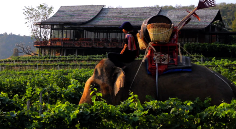 Thaise wijn: Het landgoed van Monsoon Valley in Hua Hin