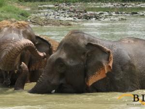 Ritje op een olifant