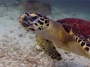 onderwaterwereld ko tao, thailand