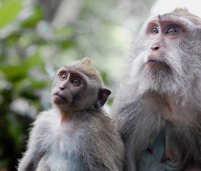 Ubud: Monkey Forest