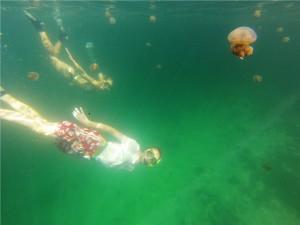 Zwemmen in een jellyfish lake