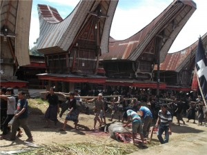 highlights Sulawesi: Tana Toraja