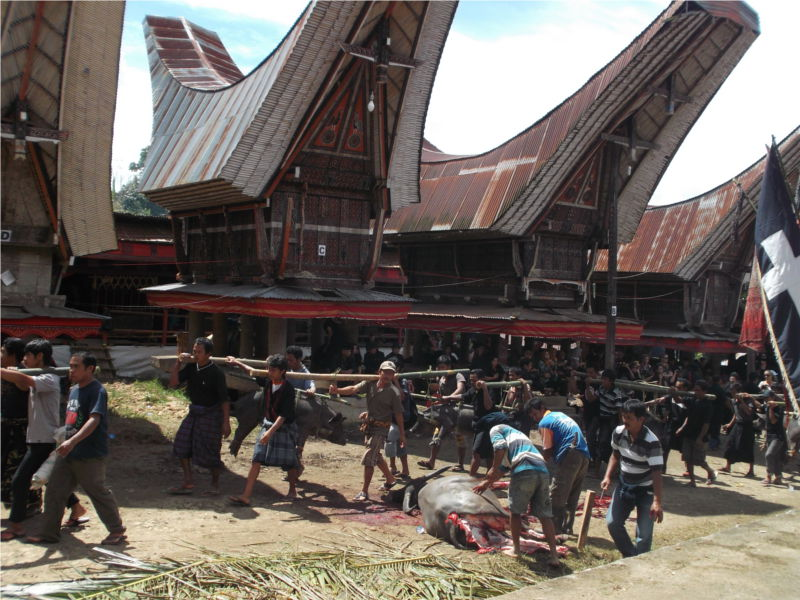 highlights Sulawesi: Tana Toraja