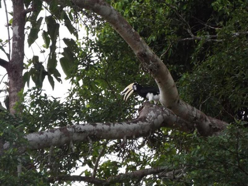 Hornbill zoam