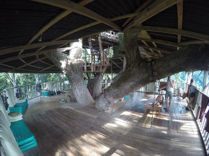 Een boomhut van 3 verdiepingen om te slapen, eten en uit te rusten.
