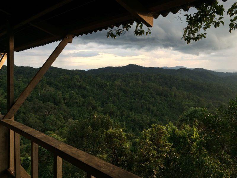 Het waanzinnige uitzicht vanuit de boomhut op 40 meter hoogte.